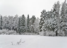 Winter forest with the ski-track Royalty Free Stock Photography