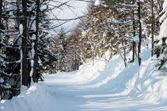 Winter forest ski trail Stock Photo