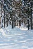 Winter forest ski trail Royalty Free Stock Image
