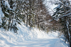 Winter forest ski trail Royalty Free Stock Photos