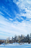 Winter Forest and Sky Royalty Free Stock Images