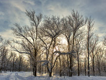 Winter forest sky sun. Royalty Free Stock Images