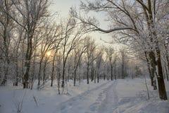 Winter forest sky sun. Stock Image
