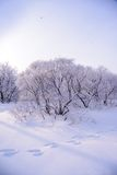 Winter forest with snow Royalty Free Stock Photos