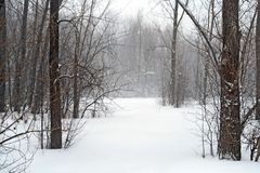 Winter forest in snow Stock Photography