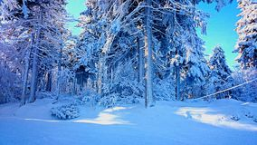 Winter. Forest in snow stock images