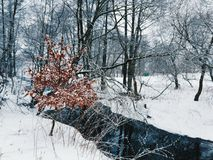 Winter forest. With snow Royalty Free Stock Photography