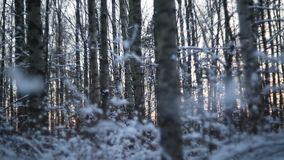 Winter forest in snow stock video footage