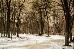 Winter Forest and Snow Royalty Free Stock Image