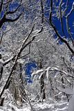 Winter forest. With snow branches stock image