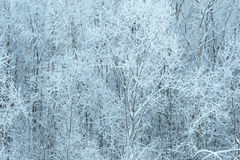 Winter forest. Snow-covered background. Stock Image