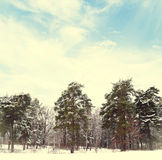 Winter forest in snow Stock Images