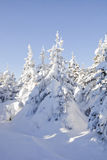 Winter forest. Snow covered spruces. Ural landscape Stock Images