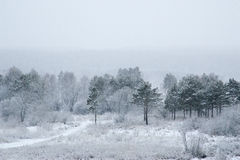 Winter in a forest with snow falling on the ground Stock Photos