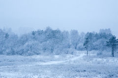 Winter in a forest with snow falling on the ground Royalty Free Stock Photo