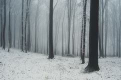 Winter in a forest with snow Stock Photography