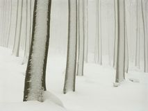winter forest with snow and fog Stock Photos