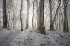 Winter forest with snow and frost Royalty Free Stock Image