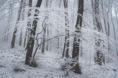 Winter in forest with snow and frozen trees Royalty Free Stock Photos