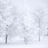 Winter forest with snow Royalty Free Stock Image