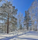 Winter forest with snow and hoarfrost covered at bright sunny we. Ather and ski trace on a glittering snow surface - wonderfull winter landscape Royalty Free Stock Photo