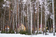 Winter forest with snow and houses stock image