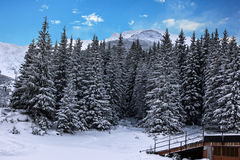 Winter forest snow landscape, Slovakia Stock Image