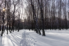 Winter forest snow Royalty Free Stock Photography