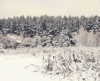 Winter forest in snow Stock Photos