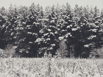Winter forest in snow Royalty Free Stock Images