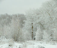 Winter forest in snow Stock Photo