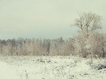 Winter forest in snow Royalty Free Stock Photography