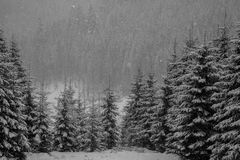 Winter forest in snow. Mountain landscape with a footpath. Sunny day and frosty weather Royalty Free Stock Photos
