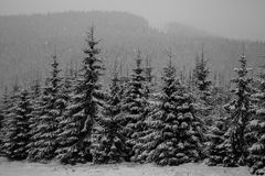 Winter forest in snow. Mountain landscape with a footpath. Sunny day and frosty weather Royalty Free Stock Images