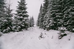 Winter forest in snow. Mountain landscape with a footpath. Sunny day and frosty weather Stock Photography