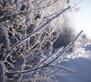 Winter forest in the snow. Mountains of snow. Frost and snowflakes. Location place Carpathian Ukraine, Europe royalty free stock photography