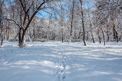 Winter forest snow park Stock Photography