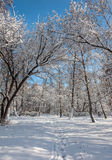 Winter forest snow park Royalty Free Stock Photos