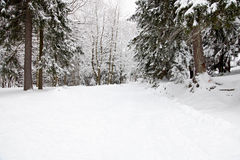 Winter forest. Snow on the road in forest Royalty Free Stock Images