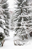 Winter forest. Snow on the road in forest Stock Images