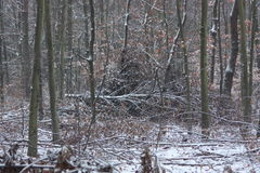 Winter in forest. Snow road Royalty Free Stock Photography