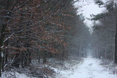 Winter in forest. Snow road Stock Photo