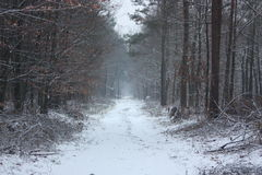Winter in forest. Snow road Stock Photos