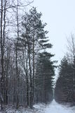 Winter in forest. Snow road Royalty Free Stock Photos