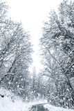 Winter forest snow road. Forest road winter snow view. Winter forest royalty free stock images