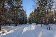 Winter forest snow road Stock Images