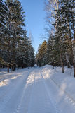 Winter forest snow road Stock Photos