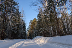Winter forest snow road Royalty Free Stock Images