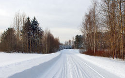 Winter forest with snow road Stock Photo