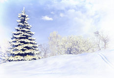 Winter forest after a snow storm blizzard. Stock Photography
